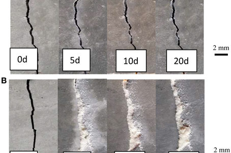 Self Healing Concrete